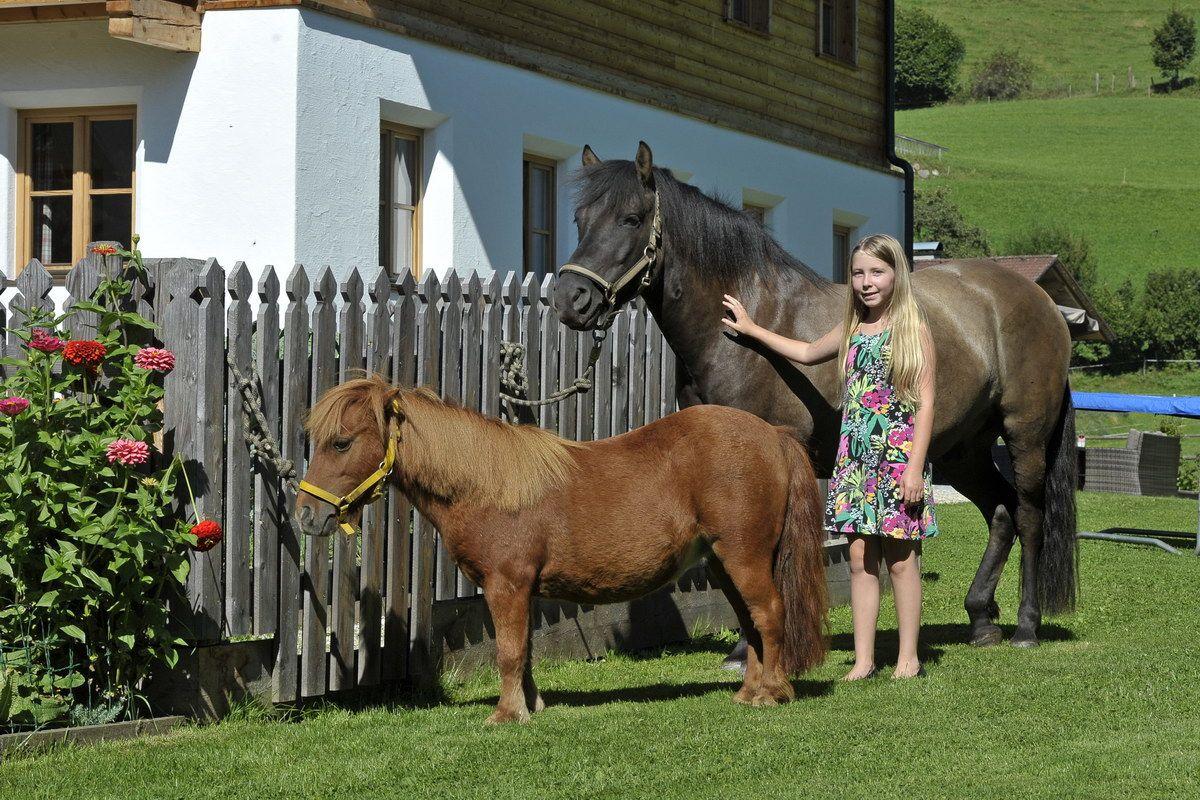 Ponies am Hinkerhof